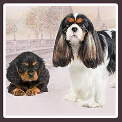 Bouton-races-chiens