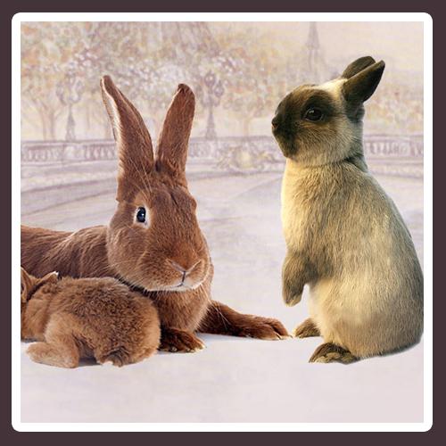 Bouton-races-lapins