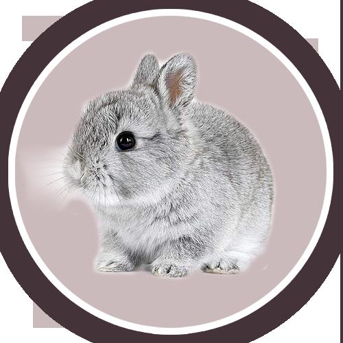 Bouton-rond-lapin